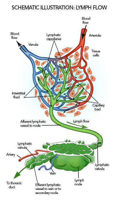 LymphaticFlow